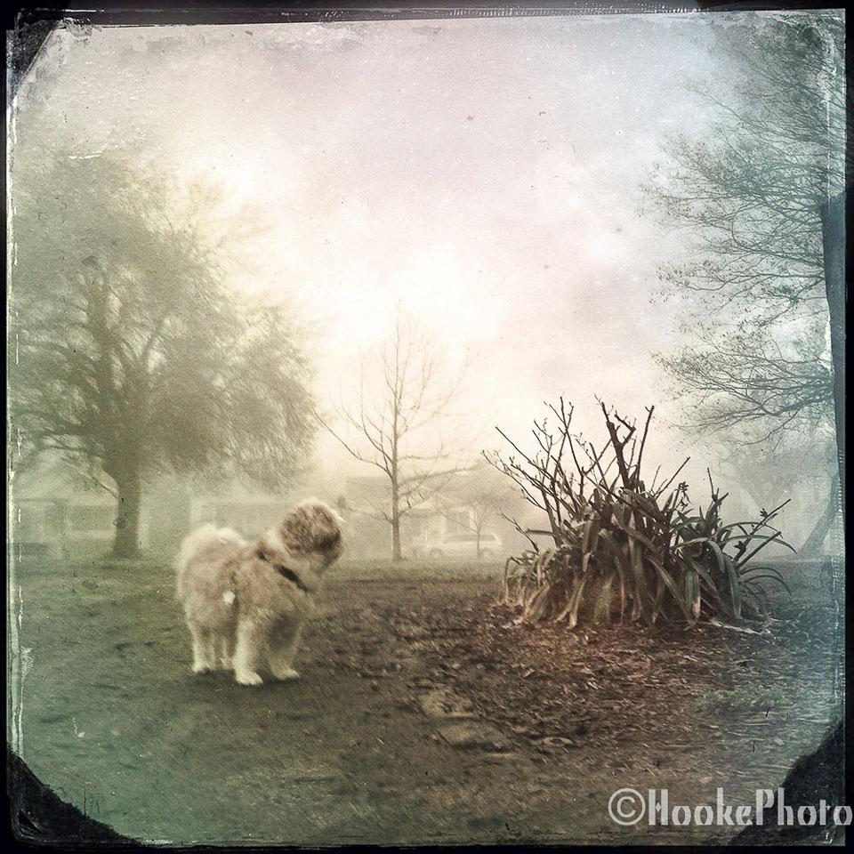 FoggyBottom-1.jpg